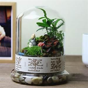 Pflanze In Flasche : glocke jarresistant glasflasche diy flasche moos fleischige pflanze landschaft zwei ~ Whattoseeinmadrid.com Haus und Dekorationen