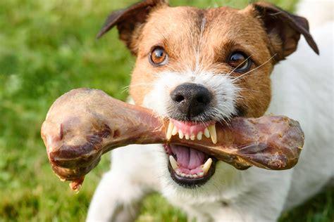 food aggression  dogs symptoms  diagnosis