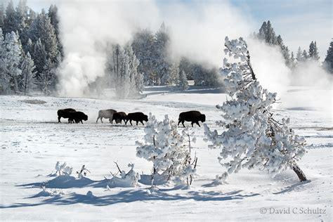 wildlife photography gallery