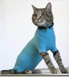 vetmedcare cat body die alternative zur halskrause
