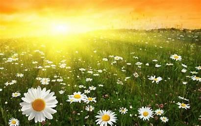 Sunny Wallpapers Background Desktop Flower Cave