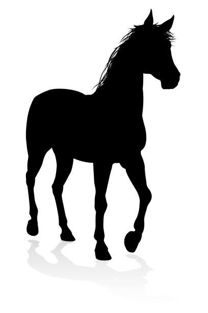 shire horse illustrations royalty  vector