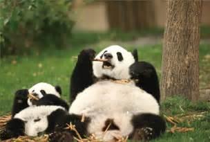 パンダ:... 生まれたパンダ』公式サイト