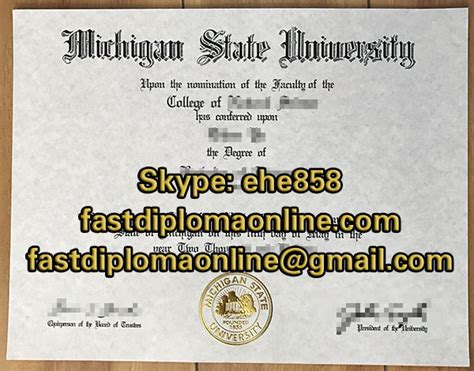 msu masters degree    experience  studying