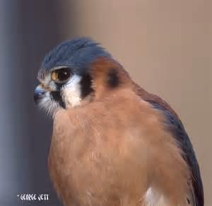 Northeastern Maryland Birds