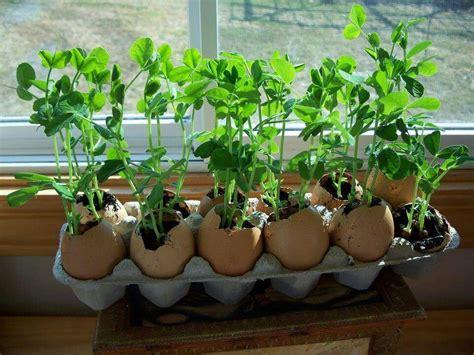 Eggshells In Garden by Egg Shells Gardens Patios Gazebos