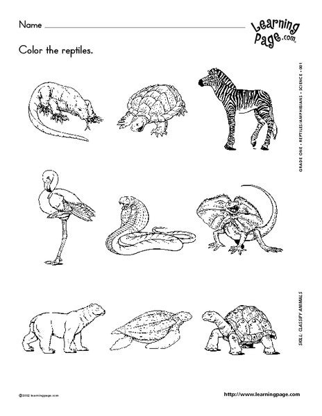 classifying reptiles and hibians worksheet for