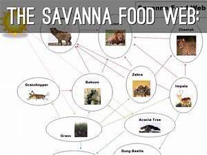 Savannah Food Web