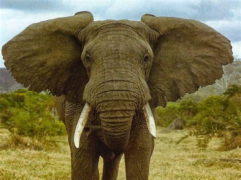 All 4u HD Wallpaper Free Download : Elephant Wallpapers ...