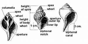 Comparing Herbivores And Carnivores