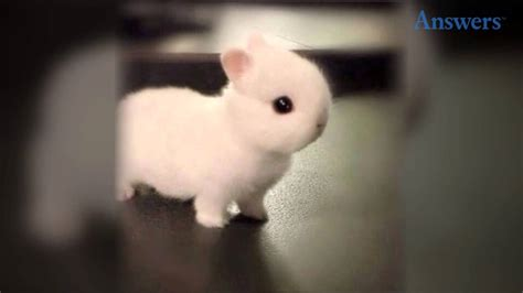 adorable    baby bunny hes  tiny