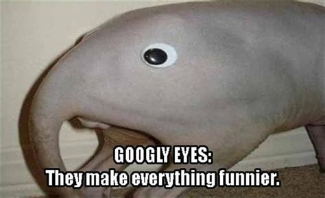 Googly Eyes Meme - funny pictures of the day 36 pics