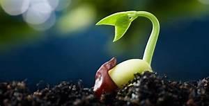 Découverte : les graines des plantes savent quand il faut