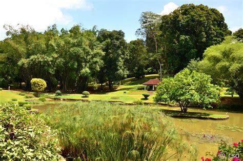 Botanischer Garten Sri Lanka by Botanischer Garten Peradeniya In Sri Lanka Fotos
