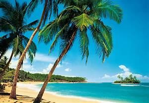 Fotostat med tropisk strandlandskab med palmer