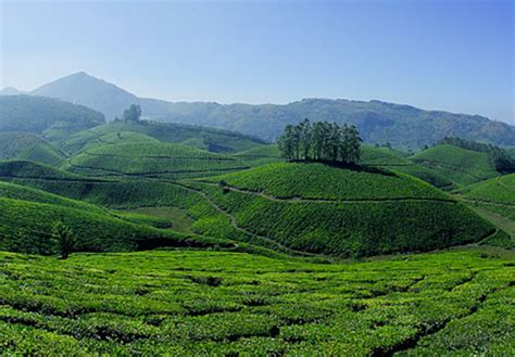 Kerala Hills, Wild Life & Back Waters (ktp 02) Kerala