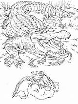 Coloring Pages Printable Animal Realistic Detailed Animals Crocodile Adults K5 Worksheets Horse Abc K5worksheets Disney sketch template