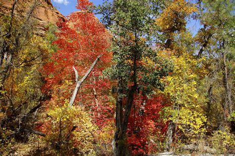 red rock secret mountain wilderness map az natural atlas