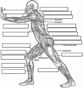 Lateral Muscle Chart