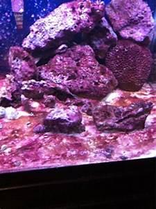 Cyanobacteria Bloom - Aquarium Advice - Aquarium Forum ...