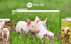 My Baby Pigs - Cute Baby Pig Hd Wallpapers