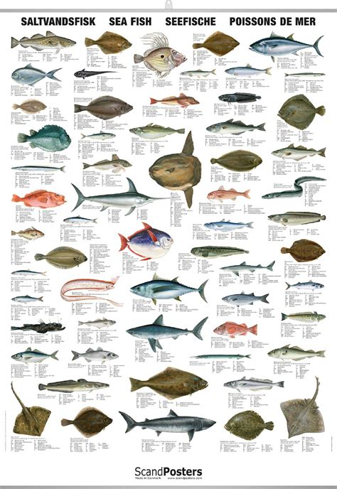 saltwater fish chart detailed sea fish poster