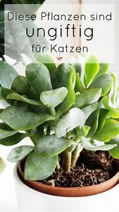 Kokoserde Für Welche Pflanzen : welche pflanzen sind ungiftig f r katzen pflanzen einrichten und wohnen katzen katzen ~ Orissabook.com Haus und Dekorationen