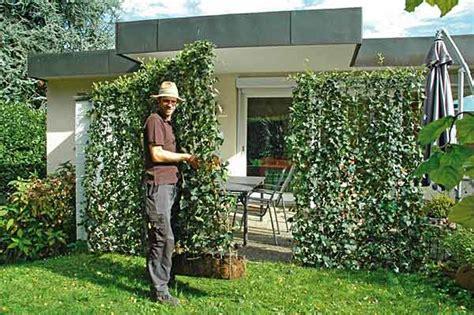 Sichtschutz Aus Pfl Natürlicher Sichtschutz Terrasse