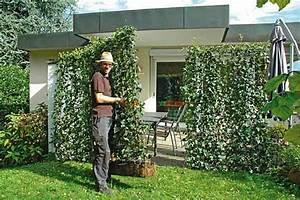 Langsam Wachsende Hecke : schnell wachsende pflanzen schnell wachsende bodendecker ~ Michelbontemps.com Haus und Dekorationen