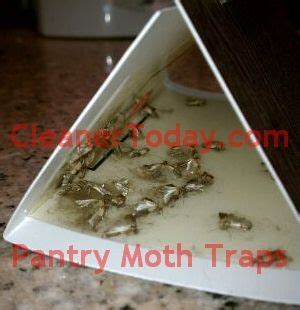 Catchmaster moth trap effective for flour / grain moths