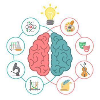Los Hemisferios Cerebrales, Funciones Y Diferencias