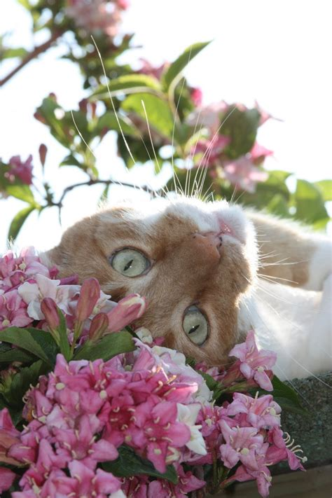 flower cats images  pinterest kitty cats