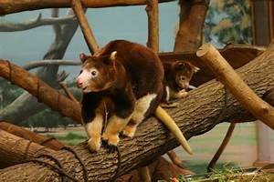 images baby tree kangaroo at zoo