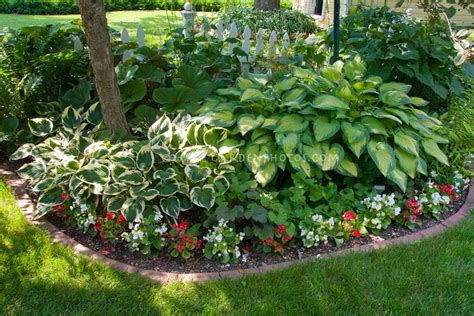 love hostas images  pinterest gardening