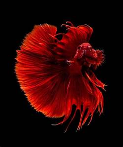 The Most Beautiful Species of Tropical Fish - 10 Pictures ...
