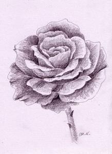 Schöne Muster Zum Selber Malen : so zeichne ich eine rose monika kunze wie malt zeichnen lernen malen lernen online ~ Orissabook.com Haus und Dekorationen