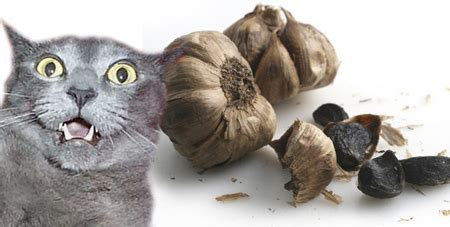 garlic for cats 301 moved permanently