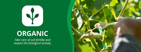 Get to know The Better Grower Program Divine Flavor