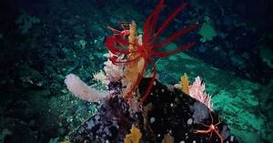 Get A Glimpse Of The Ocean Floor With Images Of Deep Sea