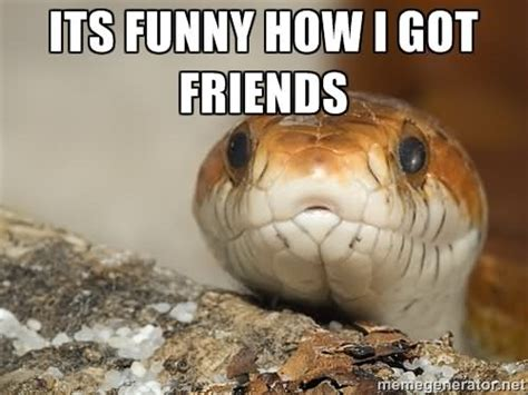 Snake Memes - 31 most funny snake meme pictures and images