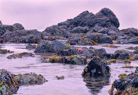 tide pools cannon beach beauty surrounding us pinterest