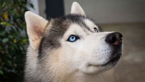 can dogs see in color do dogs see in color science says yes top tips