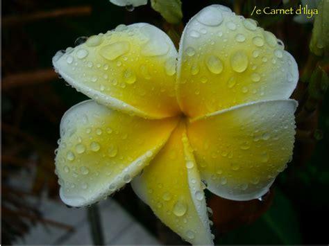 cuisine et blanc photos tipanier photo de le règne des fleurs le carnet d 39 ilya