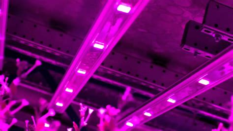 indoor farming led lights illumitex horticulture leds in world 39 s largest indoor