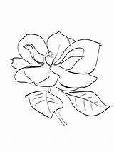 Magnolia Coloring Flowers Flower Printable Template Recommended sketch template