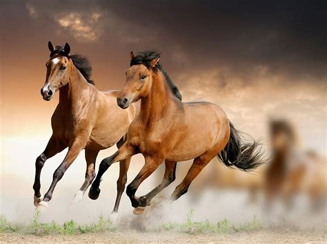 Caballos Corriendo Wallpapers Hd Fondos De Pantalla Gratis