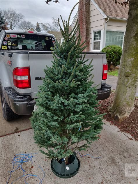 best rated fresh trees delivered to home is buying a real tree from a idea we decided to find out digital trends