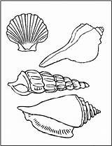 Seashell Coloring Printable Pages Shell Crafts Patterns Read Clip Adult sketch template