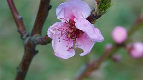 Free Images : nature branch flower petal bloom food