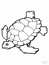Turtle Coloring Pages Sea Baby Snapping Drawing Printable Green Getcolorings Pict Clipartmag sketch template